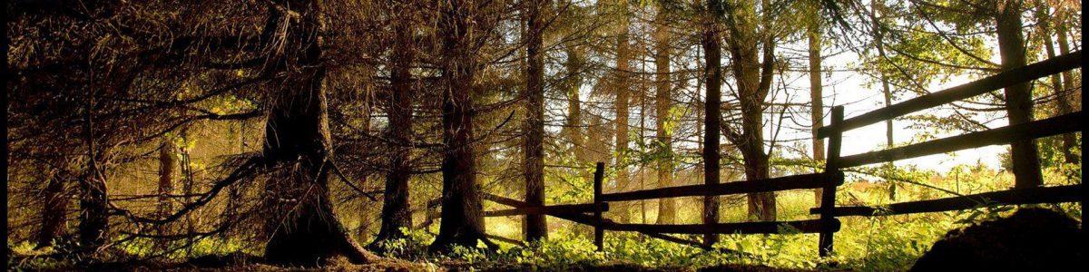 Drevo ako stavebný materiál
